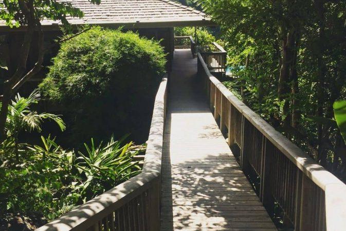 bridge-trough-woods